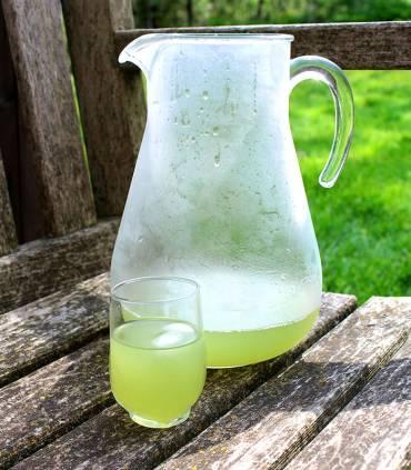 Sencha Green Tea – Hot or Cold